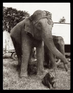 Elephants' Lighter Friends (detail)